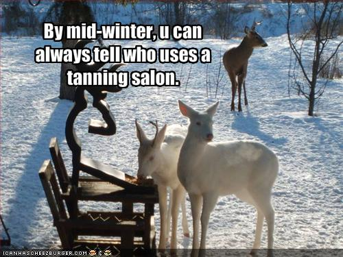 funny-pictures-one-deer-uses-a-tanning-salon