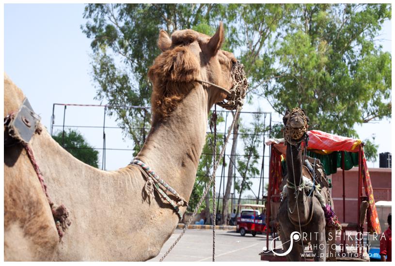 india_travel_photography_priti_shikotra15