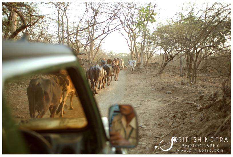 india_travel_photography_priti_shikotra29